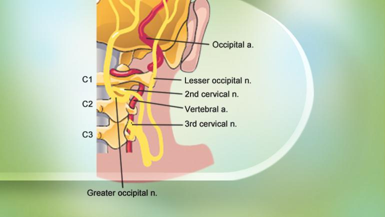 Occipital Nerve عصب اکسیپیتال