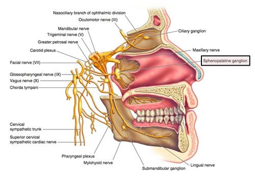 Sphenopalatine-Ganglion-1